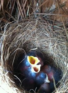hungry babies 3-28