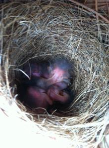 new born babies 3-27