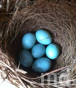 bb-eggs---4-30